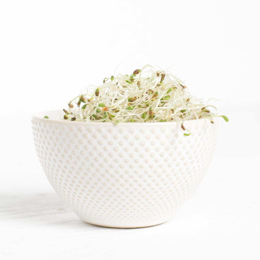 Zelf Kiemgroenten Maken: Alfalfa